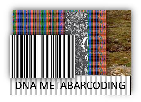 dna barcode thesis Acta universitatis ouluensis utility of dna barcodes in this thesis, i studied the utility of dna barcodes in species identification and.
