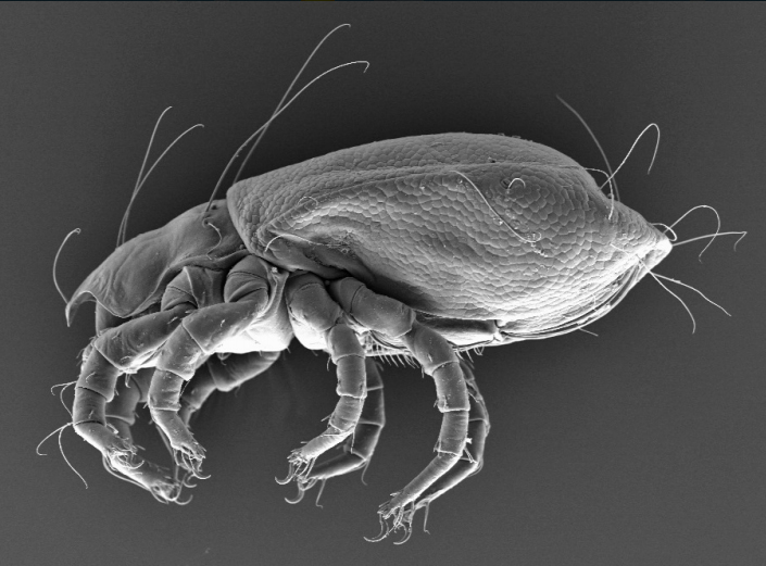 forbio course soil mites acari taxonomy biology and ecology