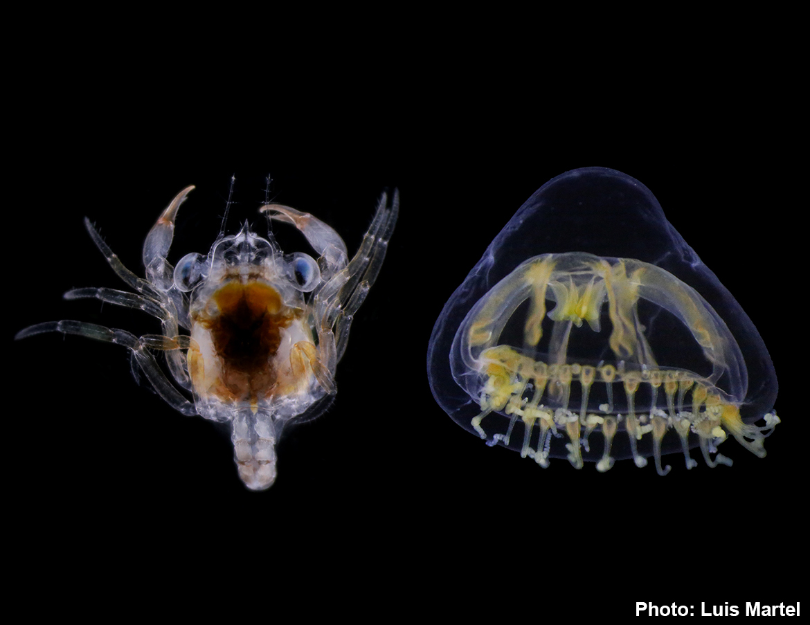 ForBio and MEDUSA course: Zooplankton Communities ...